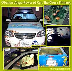 Obama's Algae-Powered Car: The Chevy Fishtank